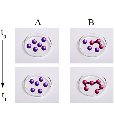 Fluctuations in protein aggregation
